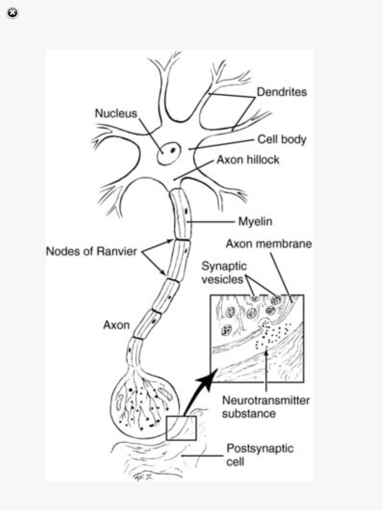 SRNA Daily Review: CENTRAL NERVOUS SYSTEM PHYSIOLOGY